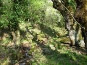 Nature at Meteora