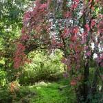 Brockley Nature Reserve