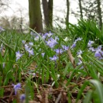 Nature Photos at Brockley & Ladywell Cemetery