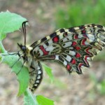 Beautiful nature: Interesting creature